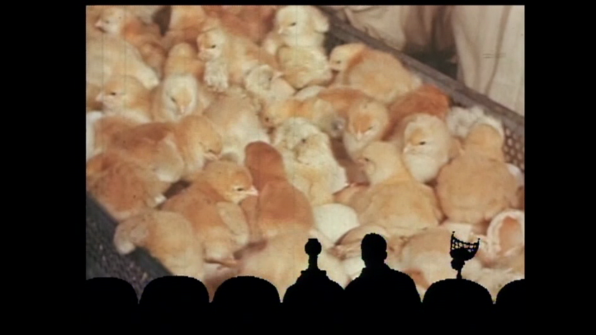MST3K Short: The Chicken Of Tomorrow