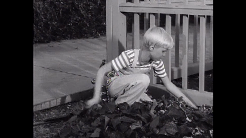 Dennis The Menace: S2 E29 - The Boy Wonder